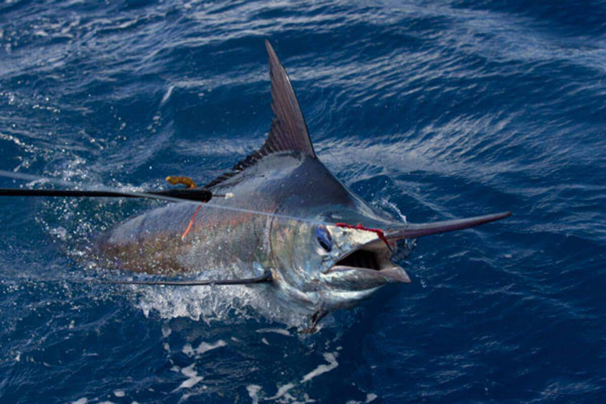 Gift Experiences: Deep sea fishing trip