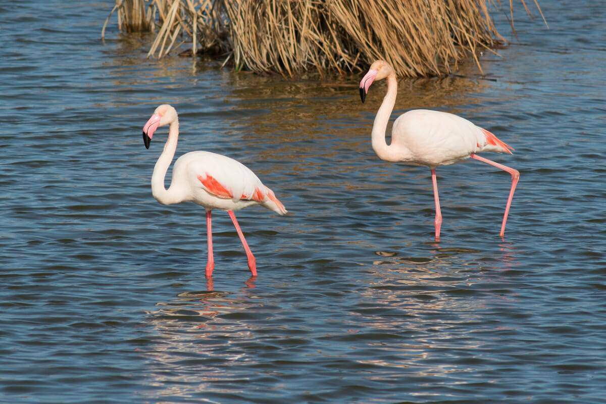 Gift Experiences: Delta del Ebro y Wildlife Sound Workshop